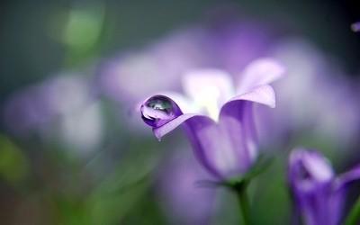 טל על פרח